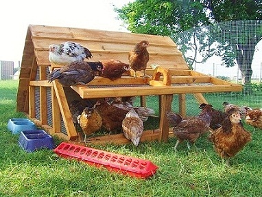 texas farm chicken coops