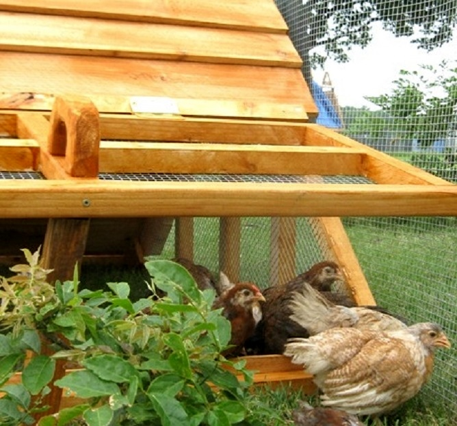 Amazing Get Mom A Charming Chicken Coop For Christmas  US Made Chicken/Duck Coop  With Cedar Roof For 2 7 Chickens