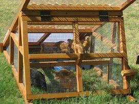 portable duck coop for sale ship nation wide