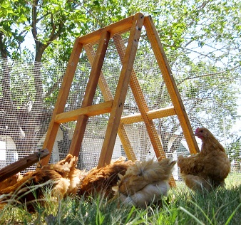 portable chicken fenac for sale in Dallas Texas