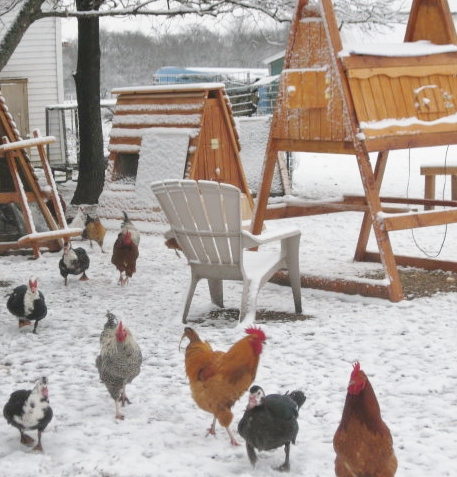 winter coop for chickens