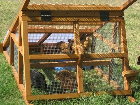 beautiful and useful duck coop for sale