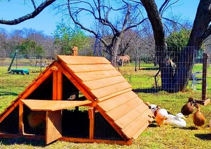 best ready made duck coop kit best ready made chicken coop too