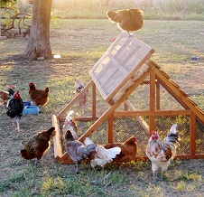 chicken/duck coops