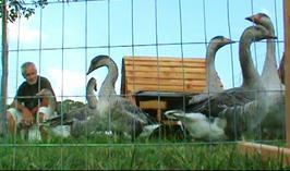 geese coop and yard for sale