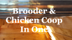chicken brooder and chicken coop