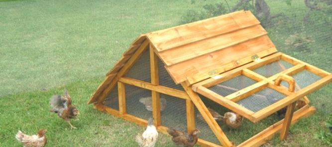 texas chicken coop