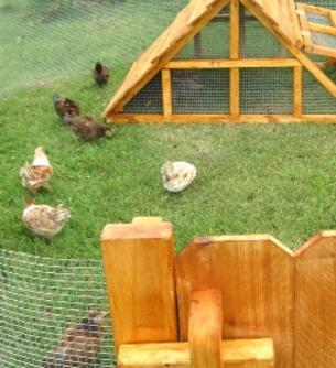 Texas chicken coop with fence