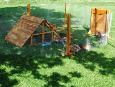 Texas Chicken coop and yard