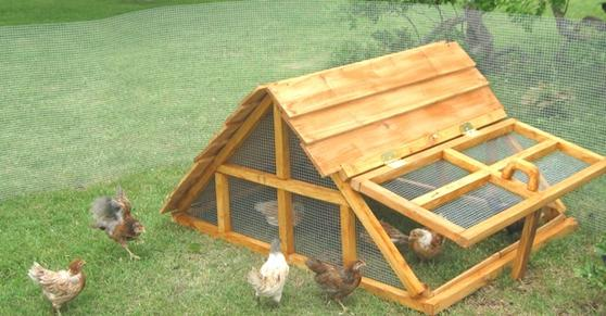 Texas chicken/duck coop/shelter/hen house