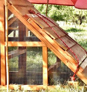 chicken coops for 5-6 chickens