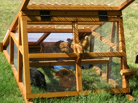 4 8 12 20 chickens coop spring sale beautiful for Movable duck house