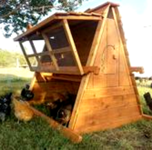 us made chicken coop for 10 chickens tx