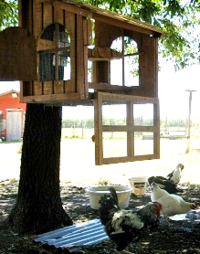 chicken coops for sale dallas Texas