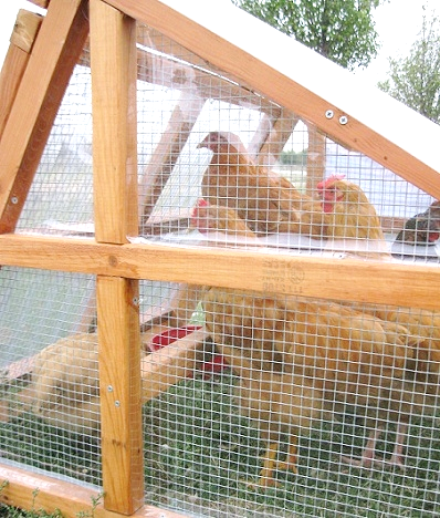 keep chicken coop warm in winter