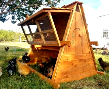 5' tall chicken coop for 8 hens