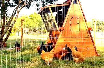 portable chicken coop and fence post  for sale