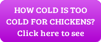 how cold is too cold for chickens