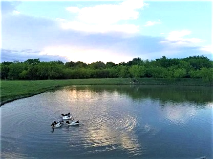 beautiful fishing pond in your own back yard house for sale near dallas texas