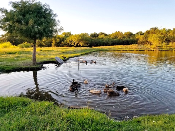 314 FM 1903 Greenville Texas near L-3 Brick House 2400 sq ft for sale with fishing pond on two acre