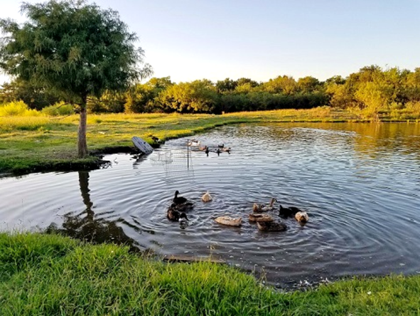 314 FM 1903 Greenville Texas near L-3 Brick House 2400 sq ft for sale with fishing pond on 2 acre