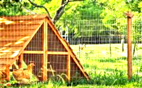 LARGE CHICKEN COOPS PORTABLE