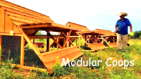 brooders and modular chicken coop