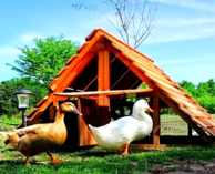 best duck coop kit good use for chicken coop too