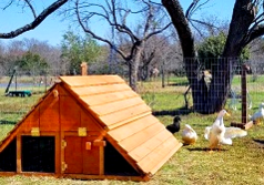 best duck coop duck houses kit in usa