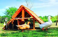 best coop for ducks duck houses good for chicken coops too