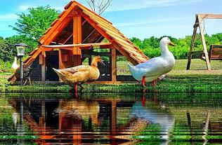 best duck coop ready made kit