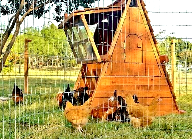 chicken coop and portable fence post set