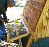 Build you own backyard chicken coops