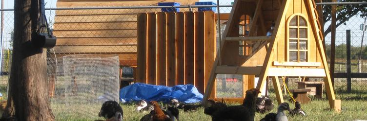 Texas backyard Chicken coops for sale