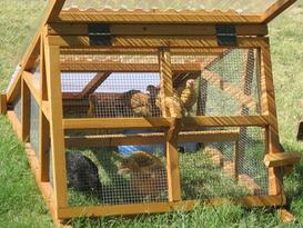 chicken coop insulate