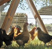texas chicken fence