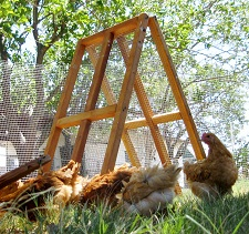 backyard chicken fence/shilter